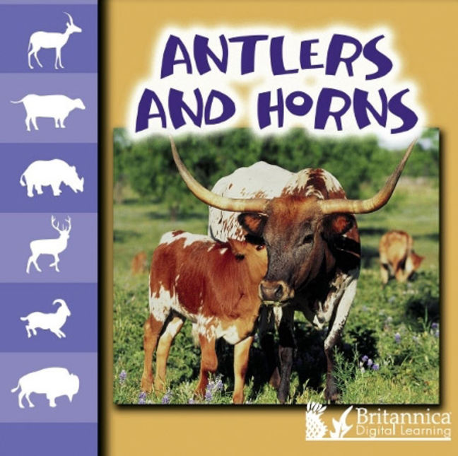 Antlers and Horns - 9781615359820