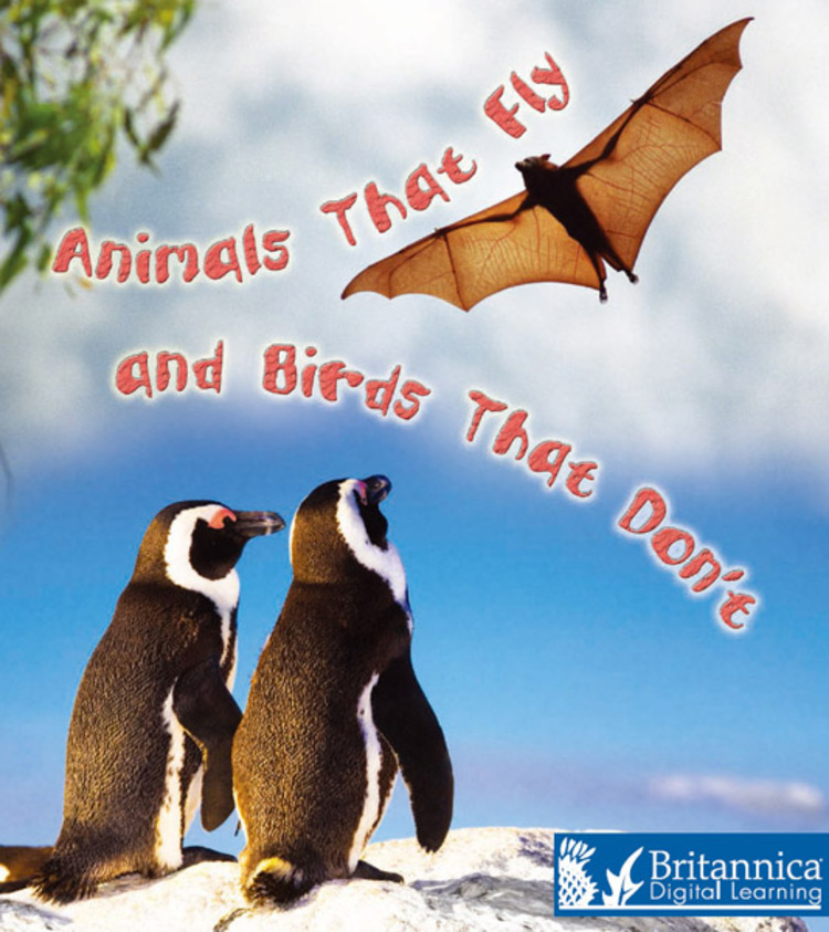 Animals That Fly and Birds That Don't - 9781625130075