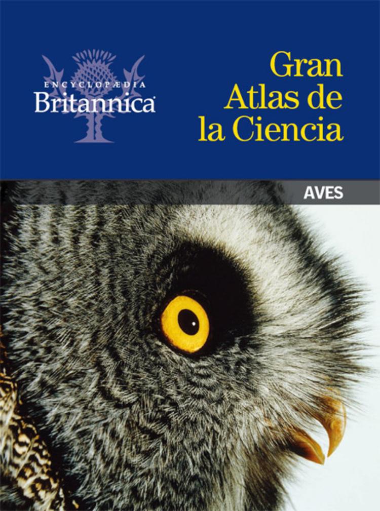 Aves - 9781625131362