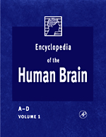 Encyclopedia of the Human Brain - 9780080548036