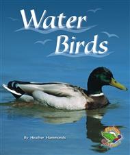 Water Birds - 9780170112956