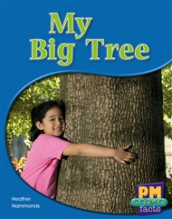 My Big Tree - 9780170123921