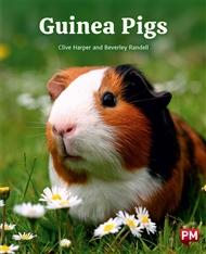 Guinea Pigs - 9780170328166