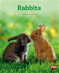 Rabbits - 9780170328326