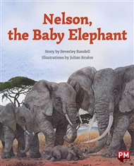 Nelson, the Baby Elephant - 9780170328418