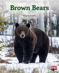 Brown Bears - 9780170328616