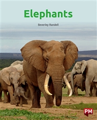Elephants - 9780170328623