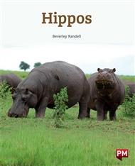 Hippos - 9780170328630