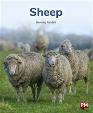 Sheep - 9780170328920