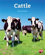 Cattle - 9780170328944