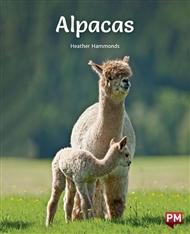 Alpacas - 9780170328951