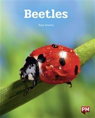 Beetles - 9780170329262
