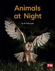 Animals at Night - 9780170330053