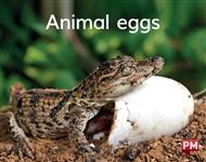 Animal eggs - 9780170414463