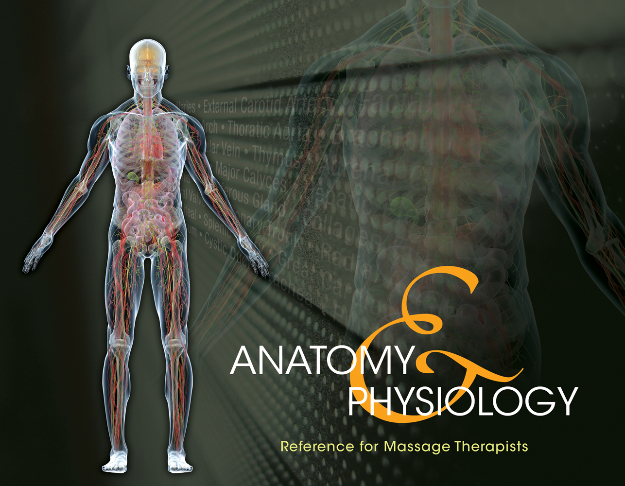 Anatomy & Physiology Reference for Massage Therapists, Spiral bound Version - 9781133704126