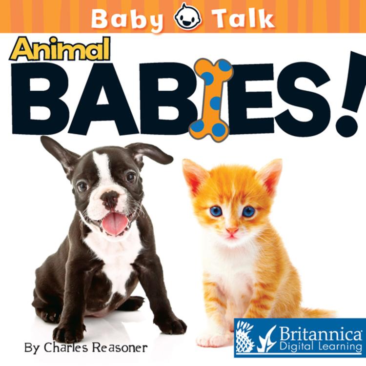 Animal Babies! - 9781615356997