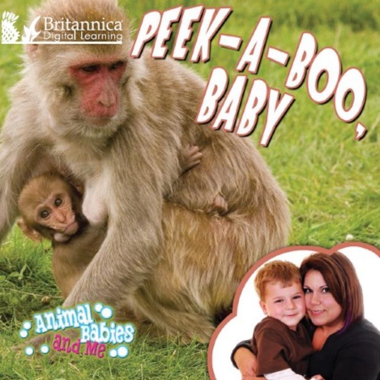Animal Babies and Me - 9781625130501