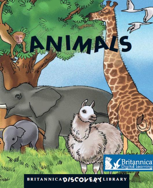 Animals - 9781625134103
