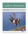 Caribou (Reindeer)