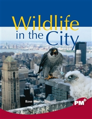 Wildlife in the City - 9780170099370
