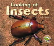 Looking at Insects - 9780170112529