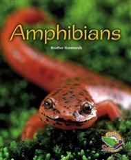 Amphibians - 9780170120739