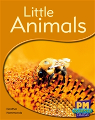 Little Animals - 9780170123945
